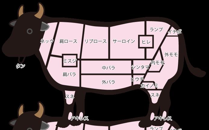 部位 イラスト 牛 牛の部位・特徴を説明!